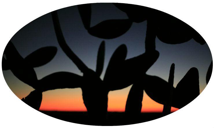 cropped-cactus-round